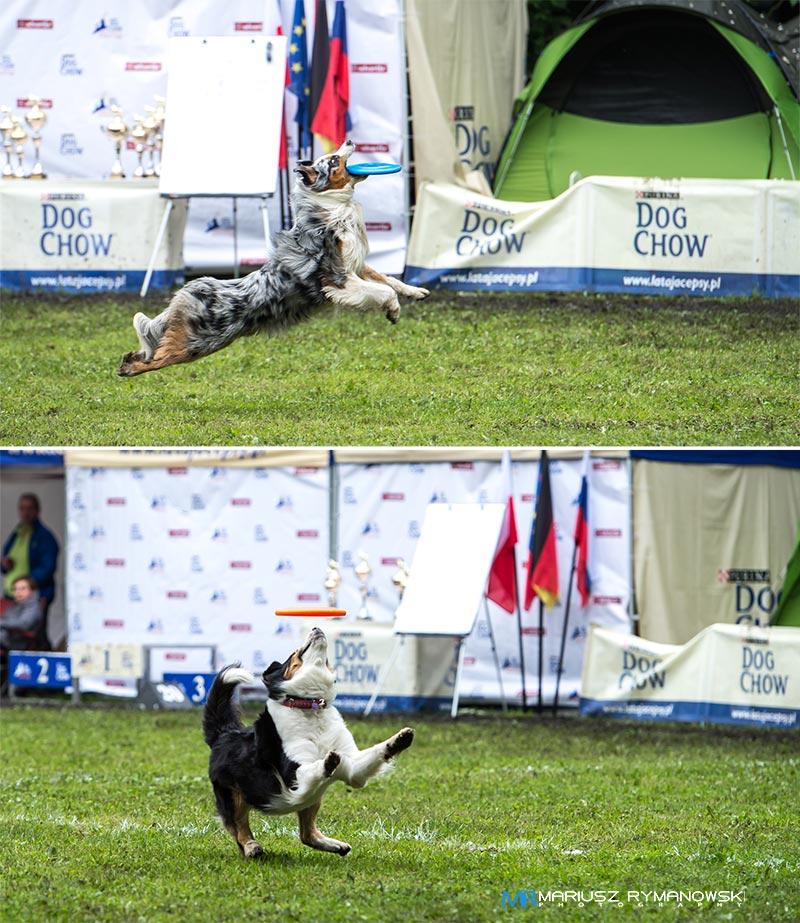 Dog-Chow-Wroclaw-2013-7